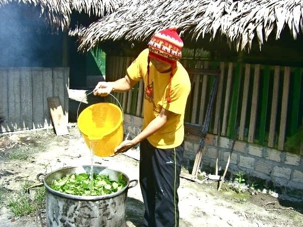 Apprentice Cooking Ayahuasca